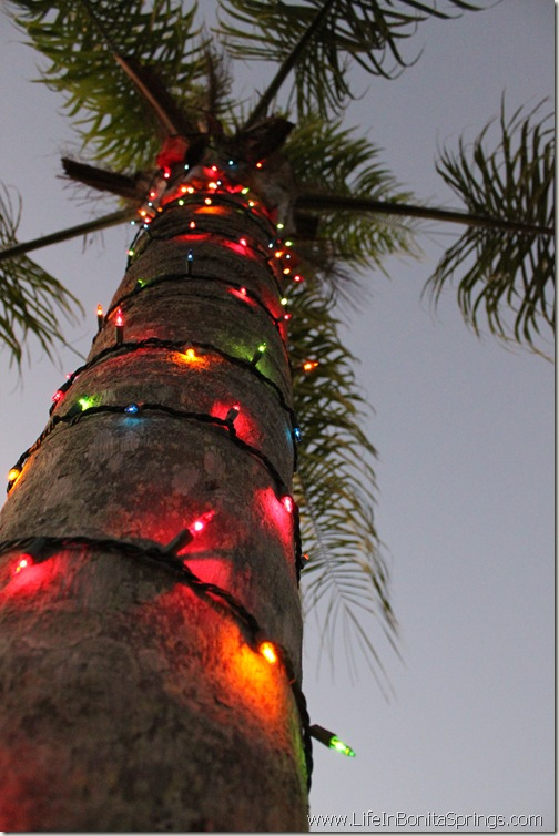 Decorated Palm