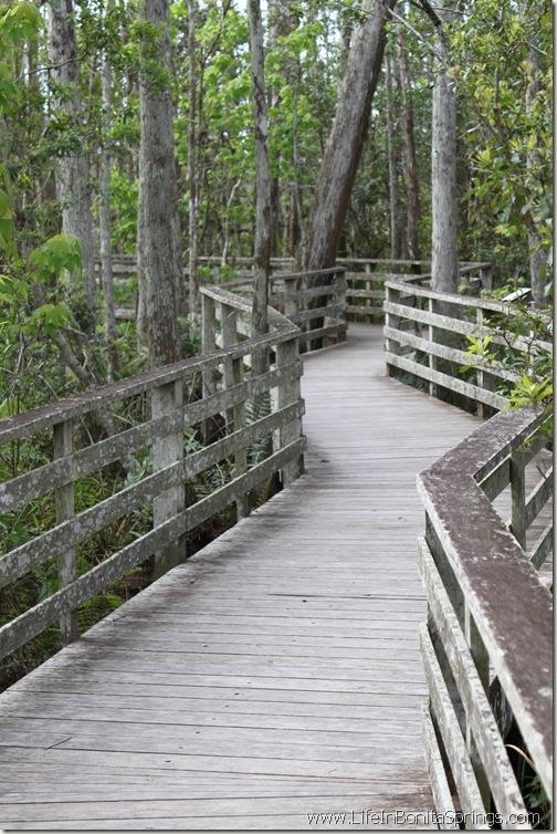 Corkscrew Swamp Sanctuary Boardwalk