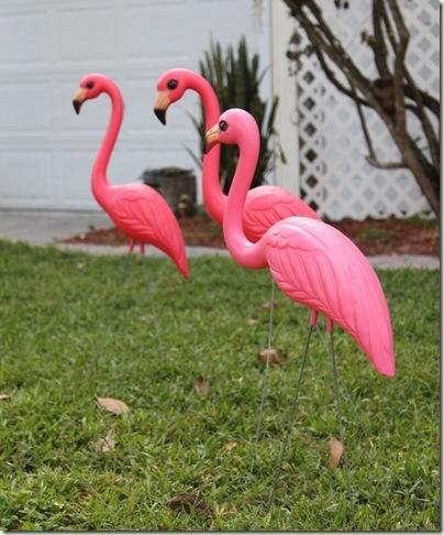 Bonita Springs Flamingo