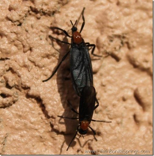 The Florida Love Bug