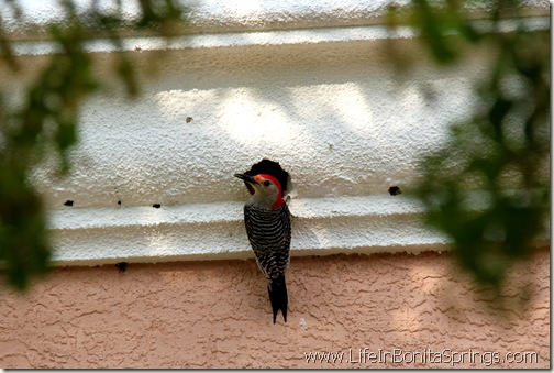 Woodpecker House Bonita Springs