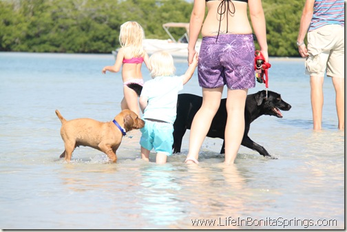 puppy sniffing a baby at the beach