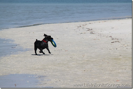 Dog Frisbee Beach