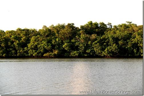 Mangroves at Bay Park North
