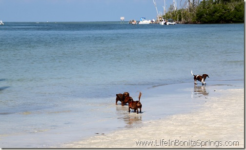 Weiner Dogs at The Beach