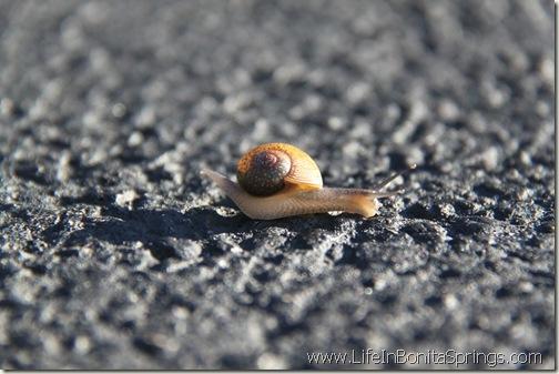 Snail Rockin that Bass Treble