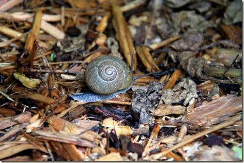 Snail Off Roading