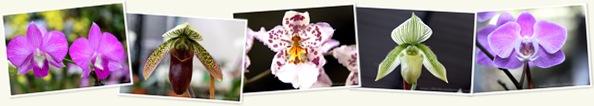 View Orchids in Bonita Springs, Florida
