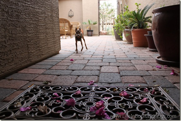 Condo Dog Pet Restrictions Rules