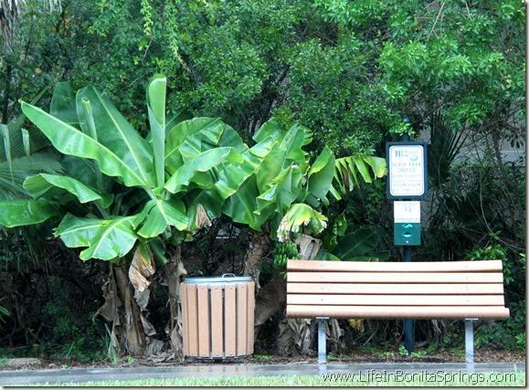 Bonita Bay Bus Stop Bench