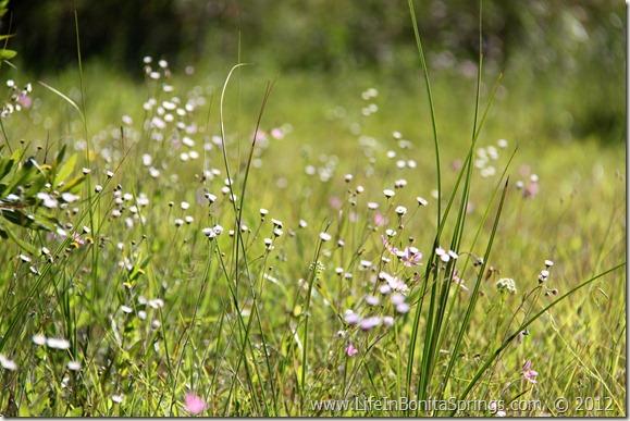 Wild Flowers at CREW