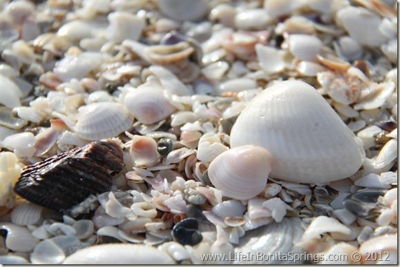 Bonita Beach Shells