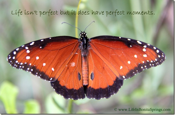 Queen Butterfly at CREW Trail quote