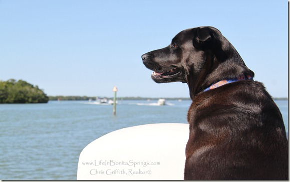 Dog on Boat Bonita Springs