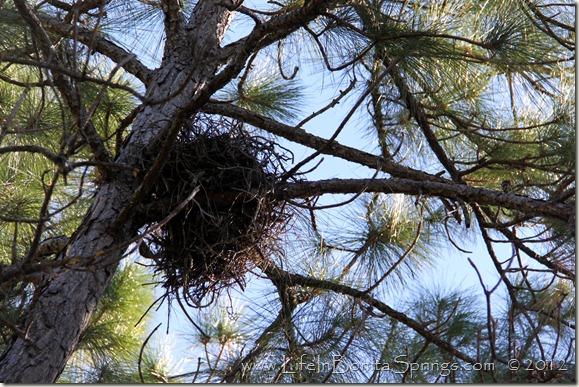 Hawks Nest