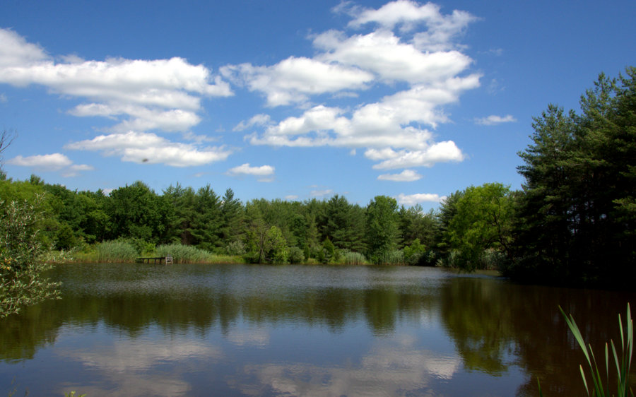 Wonder pond located on 30 acres