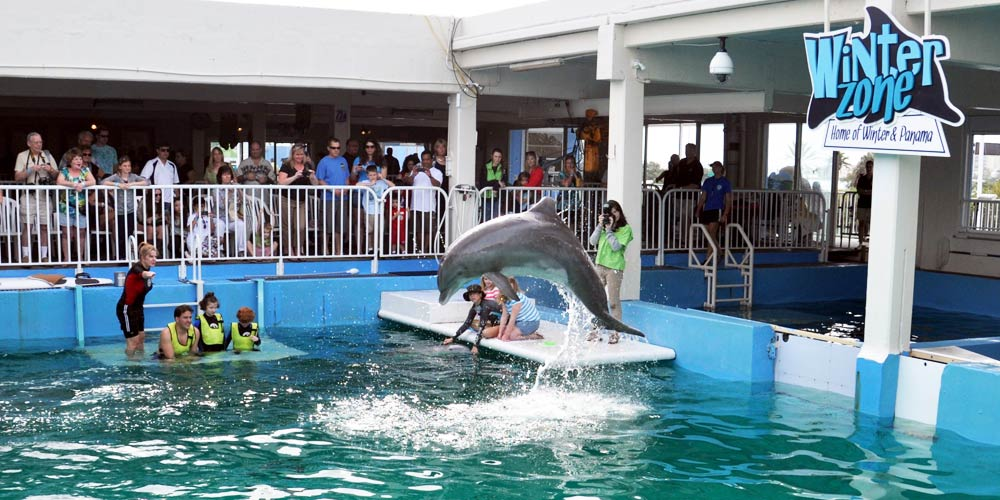 Moving to Tampa | Clearwater Relocation Guide | Clearwater Marine Aquarium in Clearwater