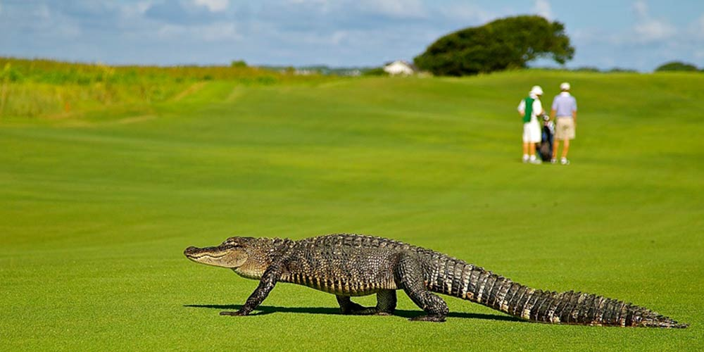 Moving to Tampa | Clearwater Relocation Guide | Golfing in Clearwater