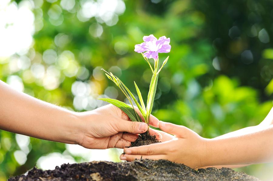 Go to Arbor Day near your Santa Clara home.