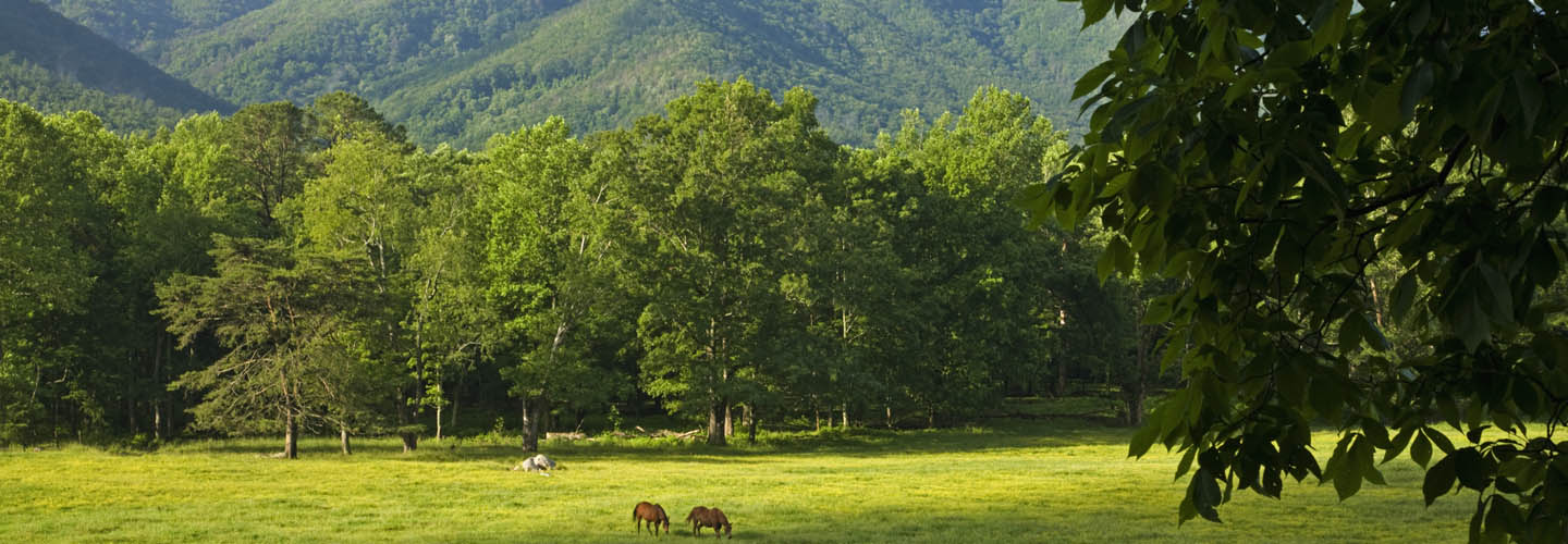 Wears Valley TN Lots & Land For Sale - MartyLoveday com