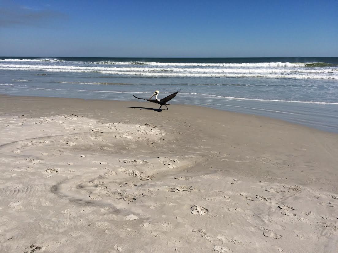 Ocean with Pelican