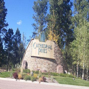Cathedral Pines Search