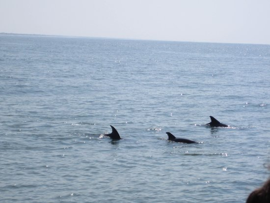 Dolphins in Myrtle Beach SC