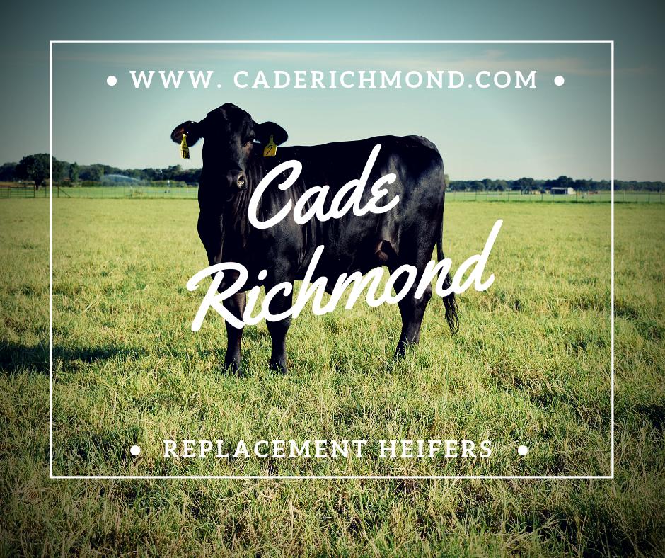 Cade Richmond Hay, Land, & Cattle