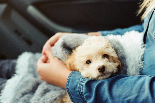 4 Tips That Will Take the Stress Out of Moving With Your Dog