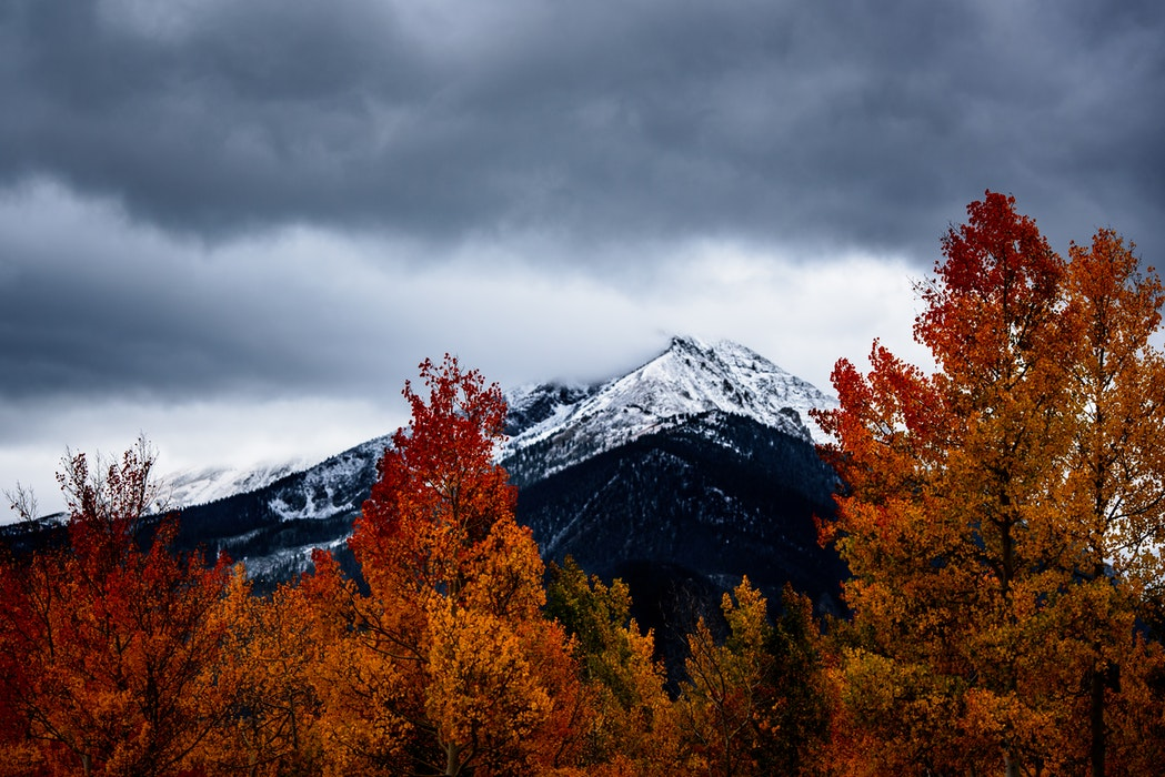 Silverthorne fall leaves  | Real Estate and Lifestyle in Northern Colorado, a blog by Joanna Gyrath, Realtor | Search homes in Fort Collins, Loveland, Greeley, Windsor, Longmont, Laporte, Wellington, Timnath, Severance, Eaton, Evans, Livermore, Red Feather Lakes