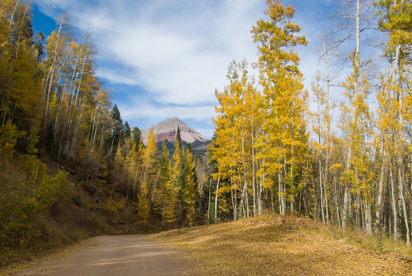 Fall leaves durango  | Real Estate and Lifestyle in Northern Colorado, a blog by Joanna Gyrath, Realtor | Search homes in Fort Collins, Loveland, Greeley, Windsor, Longmont, Laporte, Wellington, Timnath, Severance, Eaton, Evans, Livermore, Red Feather Lakes