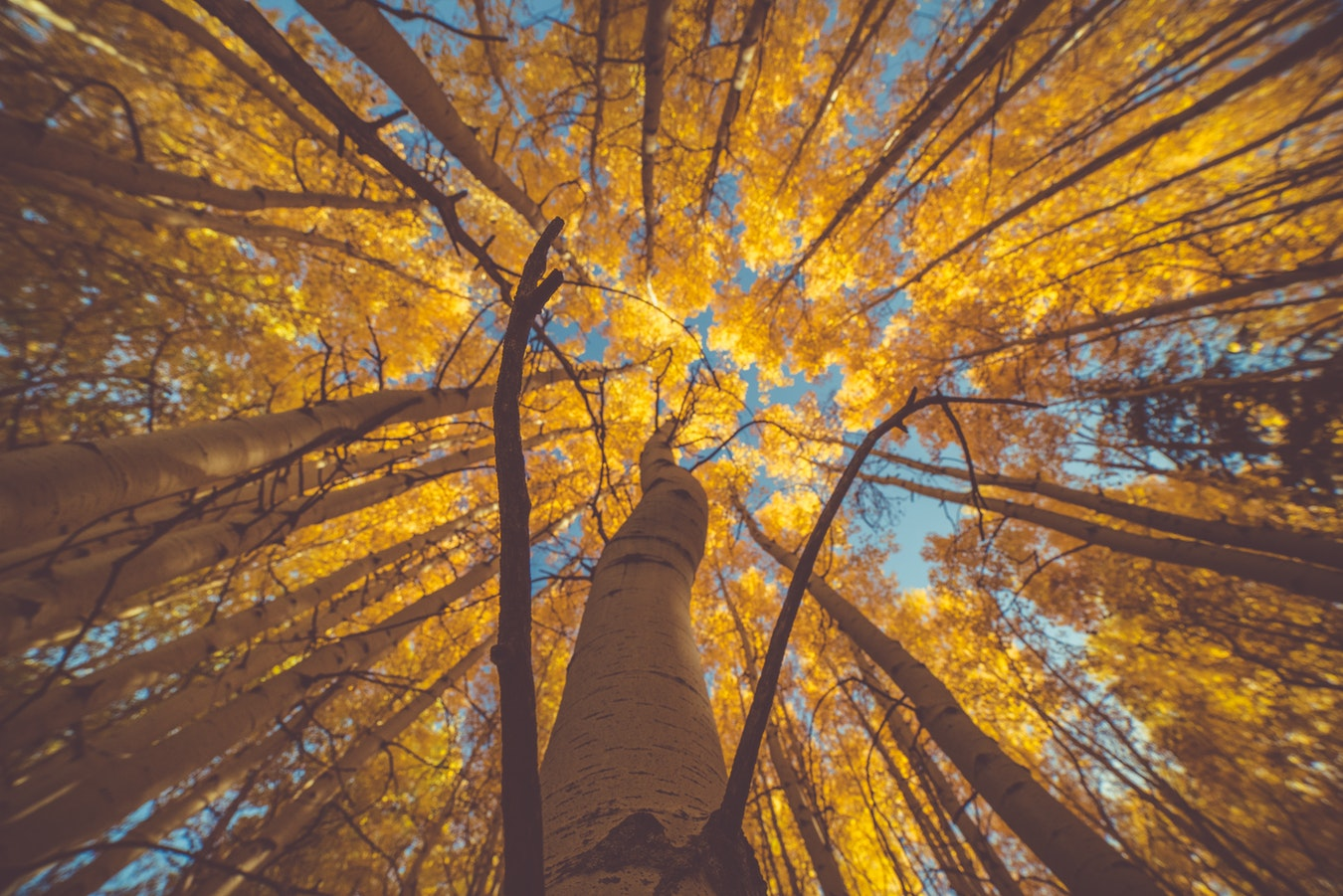 Vail trees  | Real Estate and Lifestyle in Northern Colorado, a blog by Joanna Gyrath, Realtor | Search homes in Fort Collins, Loveland, Greeley, Windsor, Longmont, Laporte, Wellington, Timnath, Severance, Eaton, Evans, Livermore, Red Feather Lakes