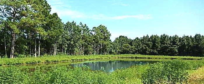 Pond in Anchor's Bend, Longs