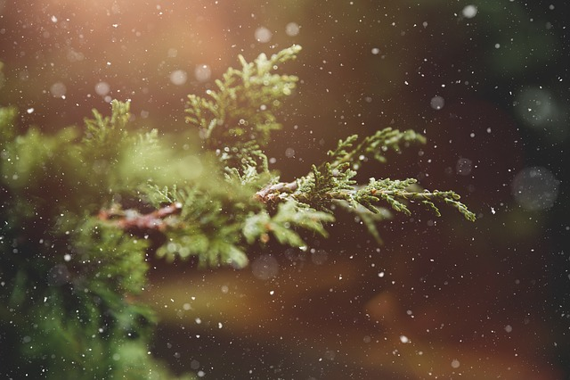 Loudoun Christmas Tree Farms Attracts Holiday Crowds. ' - The Best Christmas Tree Farms In Loudoun County