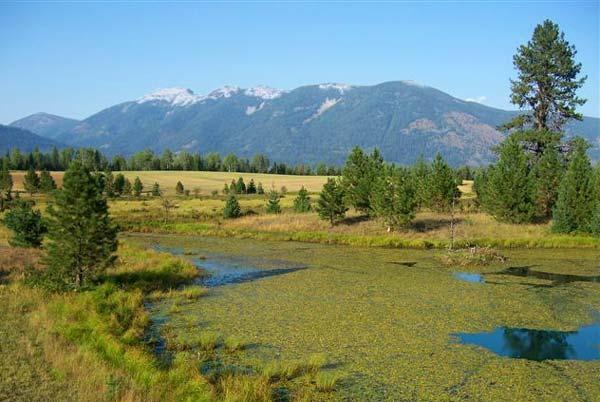 Heron Montana area