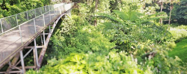 Wahiawa botanical gardens Wahiawa Oahu