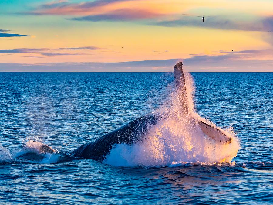Coastal Orange County home owners go whale watching.