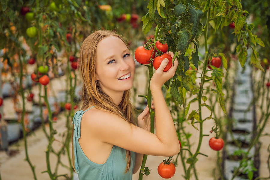 Go to TomatoMania near Newport Coast homes.