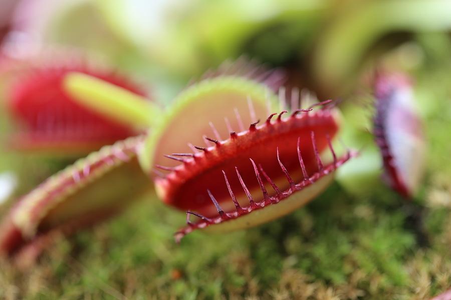 See carnivorous plants near your coastal Orange County home.