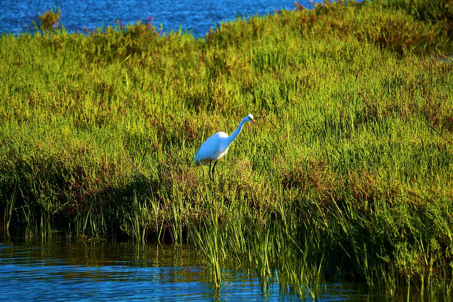 Visit Bolsa Chica near your coastal Orange County home.