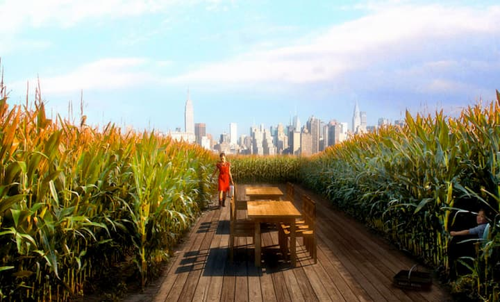 Poetic views of corn and skyscrapers from raad's hotel at Bushwick 1, a mixed-use developmentin the heart of hip Brooklyn. The project's cultural hub will be a vast warehouse, whose roof will be occupied by New York's largest rooftop farm.