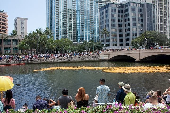 Rubber duckies on Ala Wai Canal