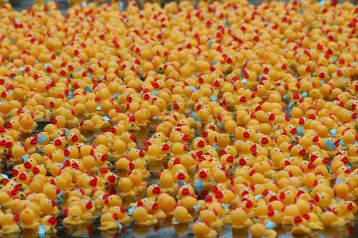 Rubber duckies on Ala Wai Canal