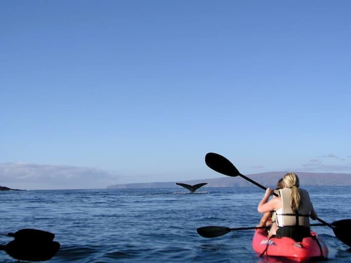 Boat Ride in Maui: Whale Tale Kayak