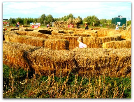 Tuttles Corn Maze | Fortville Indiana