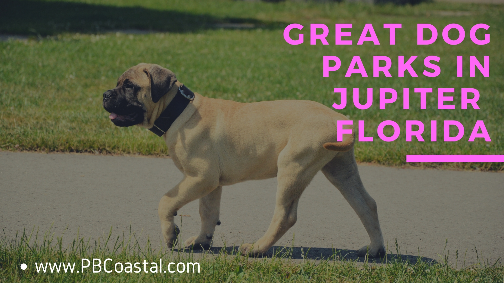 Dog parks in Jupiter