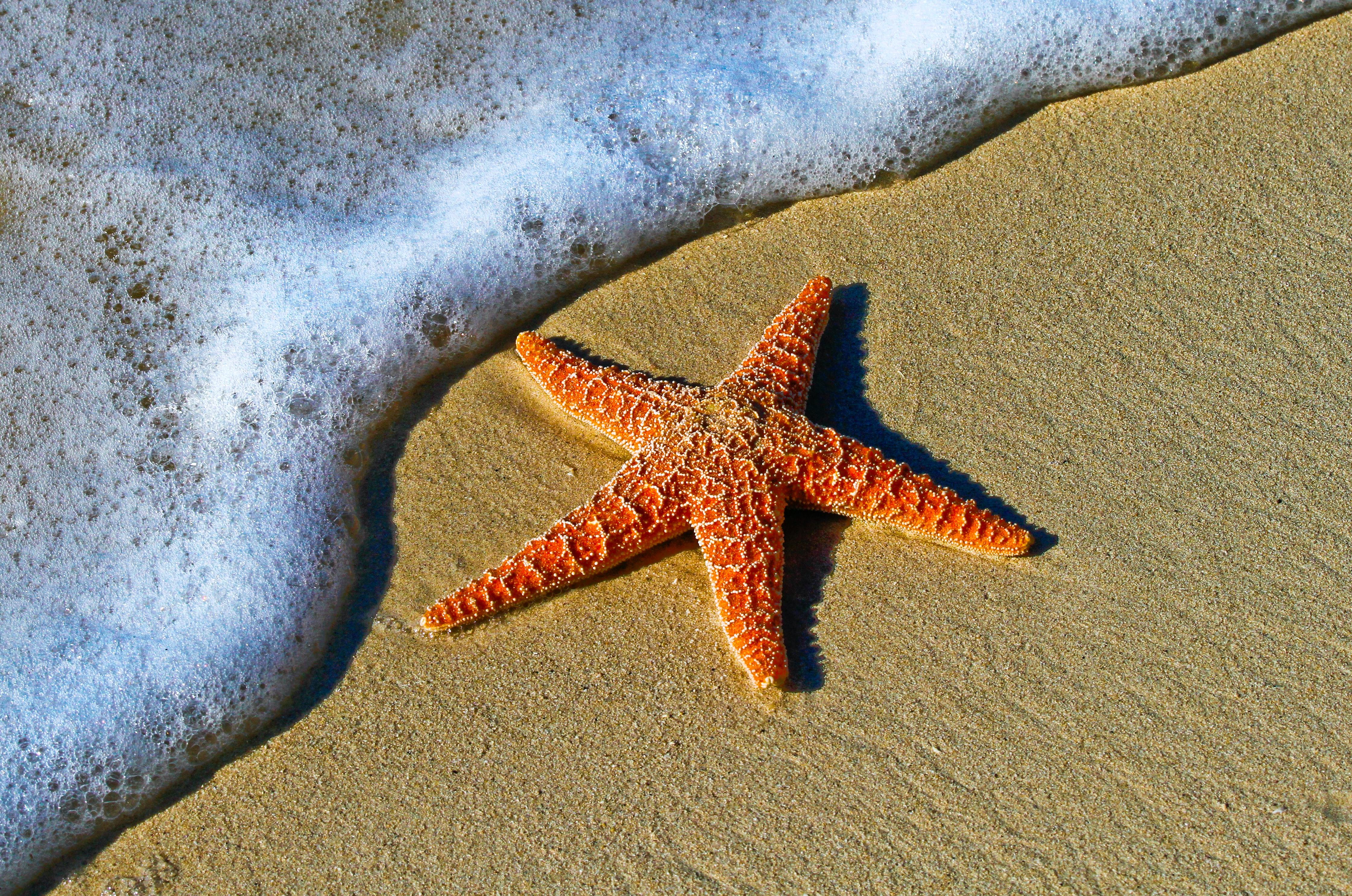 Beachfront Luxury homes Palm Beach Florida