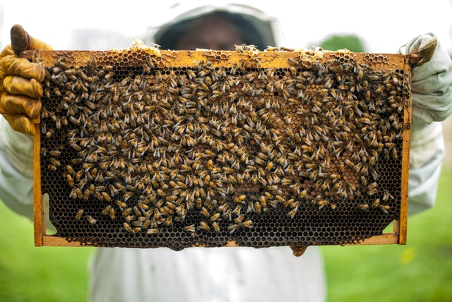 A Buzzworthy Project for Mirasol - Honey for Residents!
