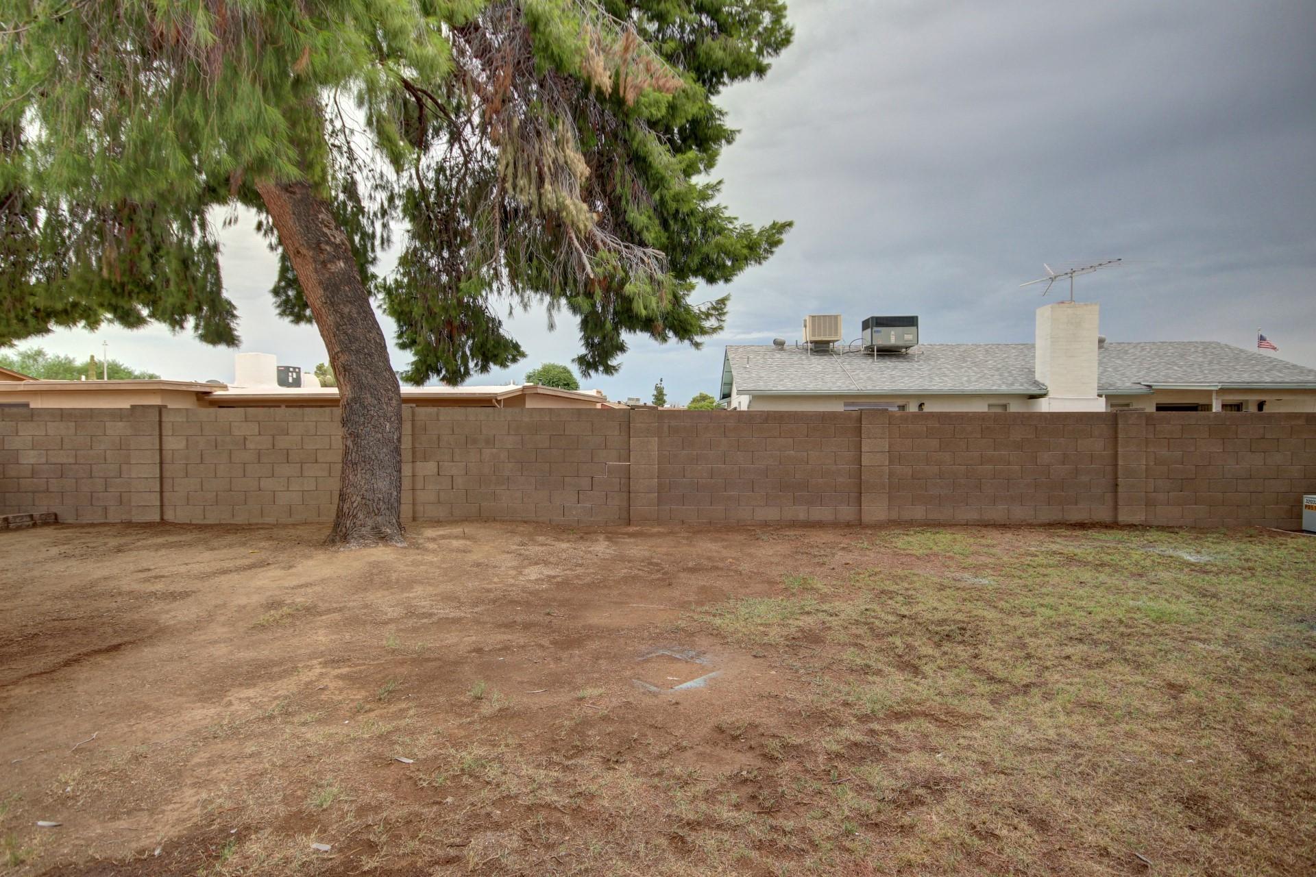 Glendale Arizona yard with pine trees