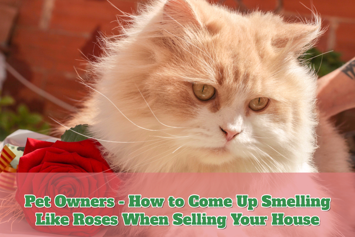 Pet Owners guide to selling a house